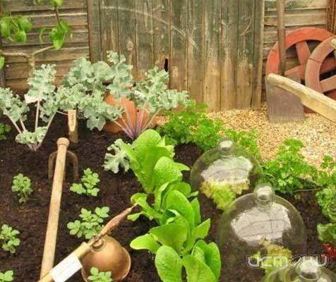 Сад и огород своими руками видео фазенда - 31